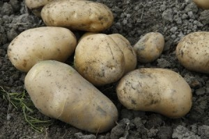 A Closer Look At Potato Varieties