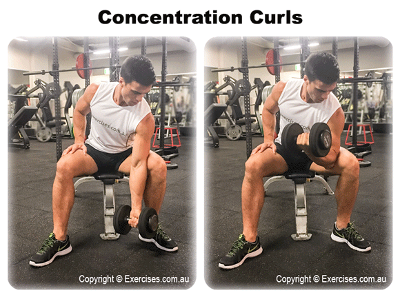Concentration Curls