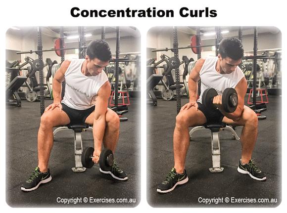 Concentration Curls