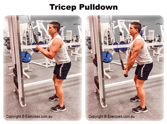 Tricep Pulldown