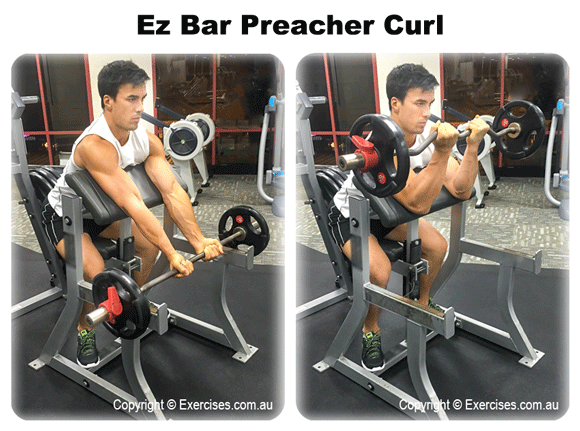 ez curl bar maximum weight loss