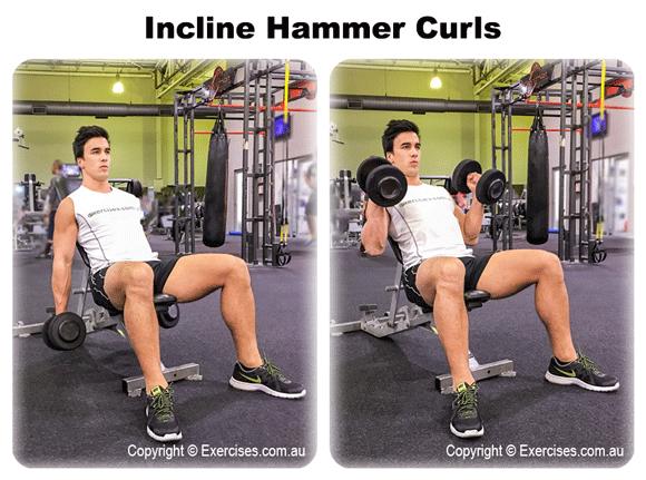 Incline Hammer Curls