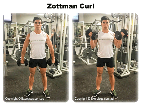 Zottman Curl