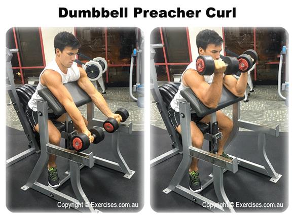 Dumbbell Preacher Curl