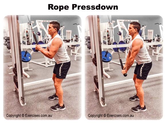 Rope Pressdown Exercises Com Au
