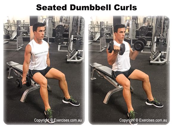 Seated Dumbbell Curls