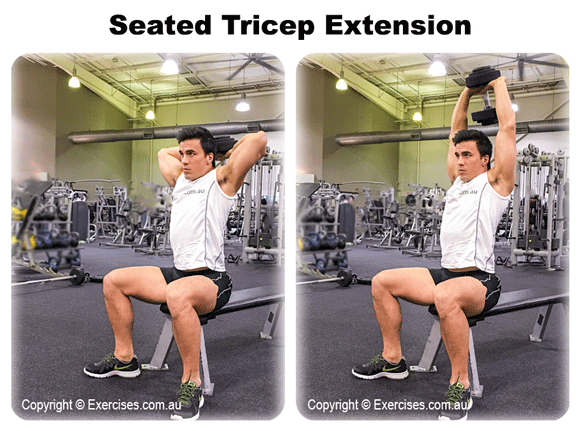 Seated Tricep Extension