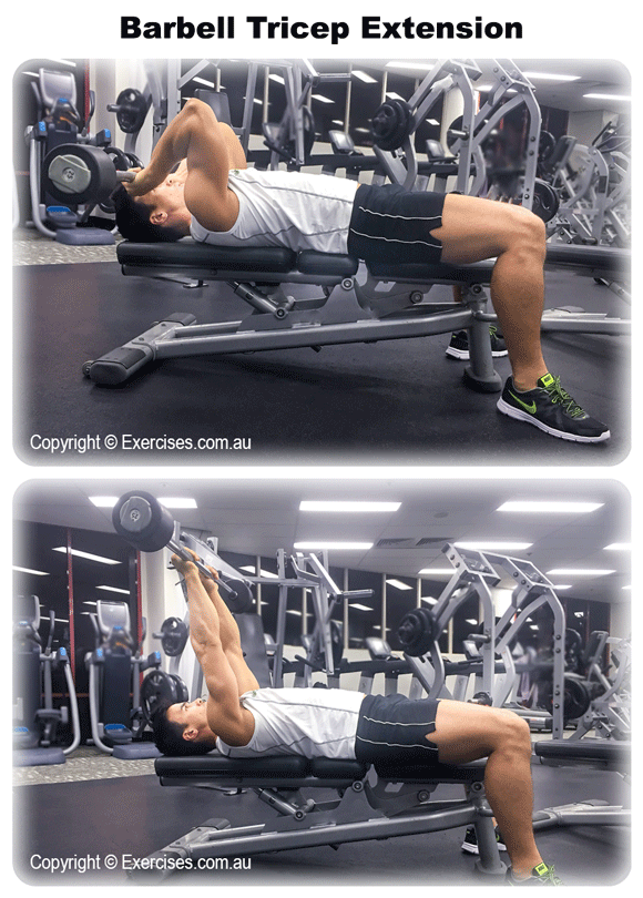 Barbell Tricep Extension