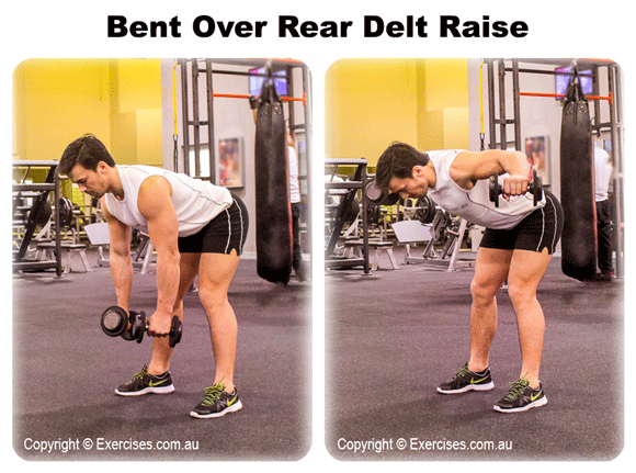 Bent Over Rear Delt Raise