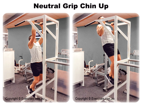 Neutral Grip Chin Up