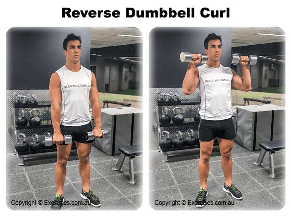 Reverse Dumbbell Curl