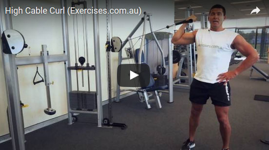 High Cable Curl | exercises.com.au