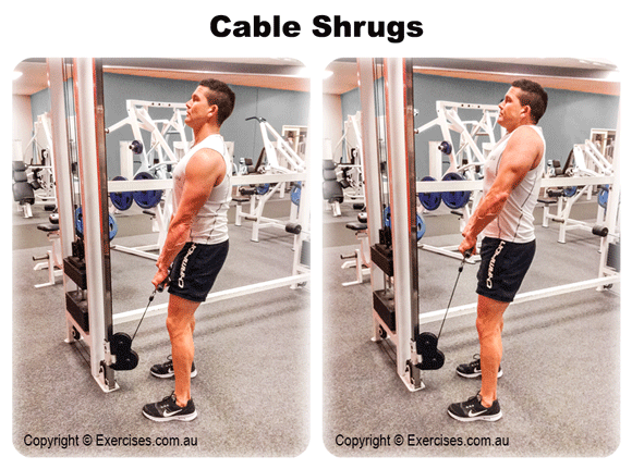 Cable Shrugs