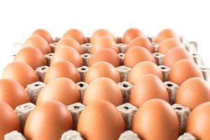 Egg Albumin Protein