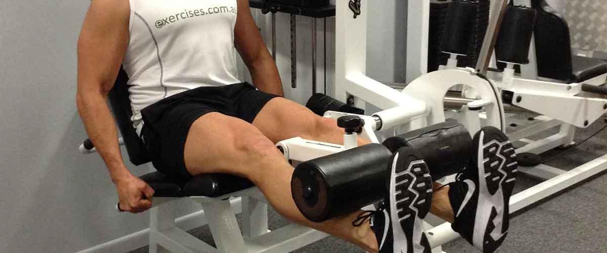 Quads Exercises [104 Demo Video Exercises For Quads]